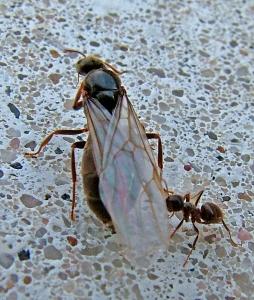 Ants Website