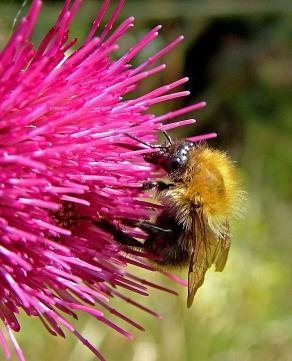 Bee Website
